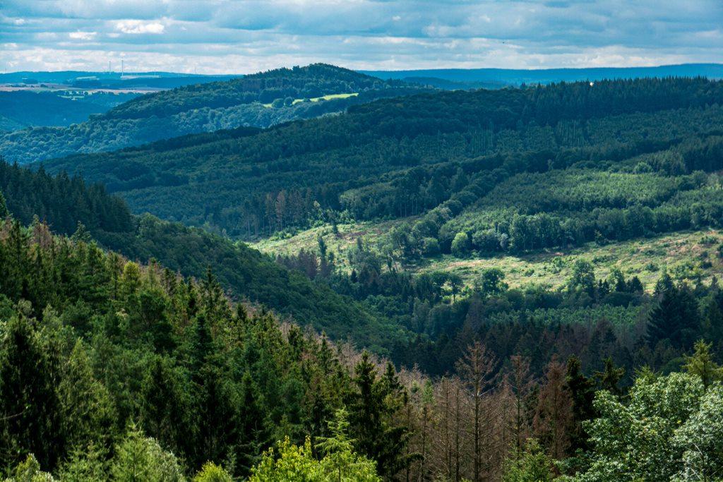 Neues aus dem Hürtgenwald